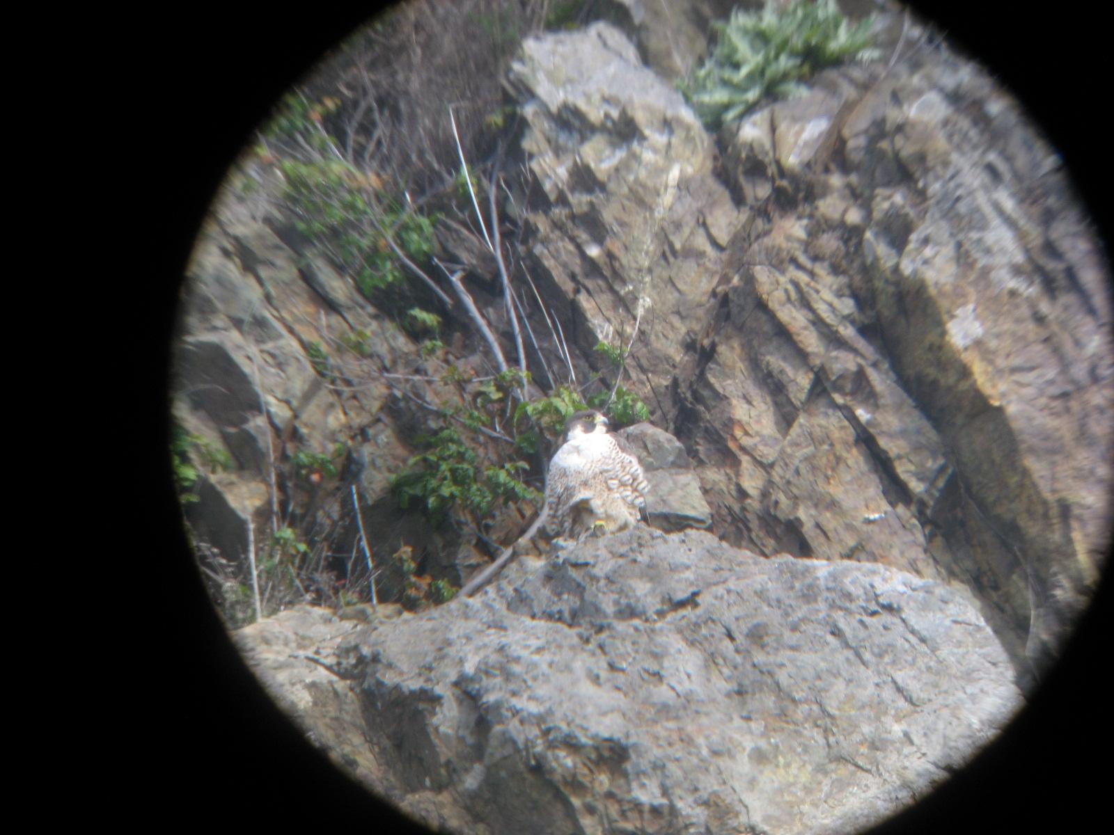 male-on-gatehouse-cliff.jpg