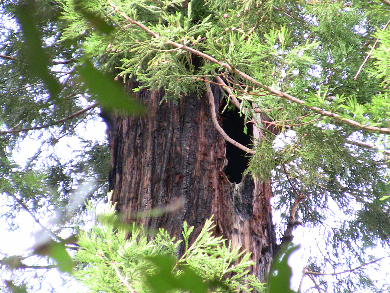 big-creek-nest-2012-004.jpg